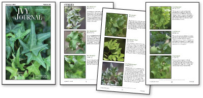 The Gardener's Guide to Growing Ivies